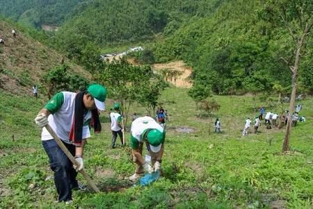 Lập dàn ý chứng minh bảo vệ rừng là bảo vệ cuộc sống của chúng ta