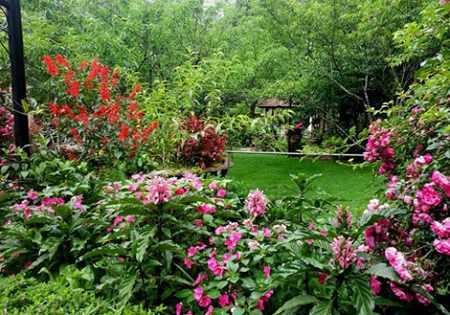 Lập dàn ý miêu tả khu vườn nhà em vào buổi sáng đẹp trời