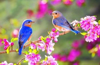 Bài văn biểu cảm về mùa xuân