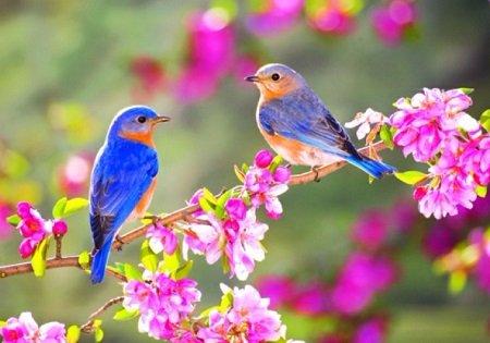 Ý nghĩa nhan đề bài thơ Mùa xuân nho nhỏ Lớp 9