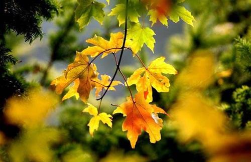 Bài viết số 1 lớp 10 đề 2: Cảm nghĩ thiên nhiên, đời sống con người trong thời khắc chuyển mùa
