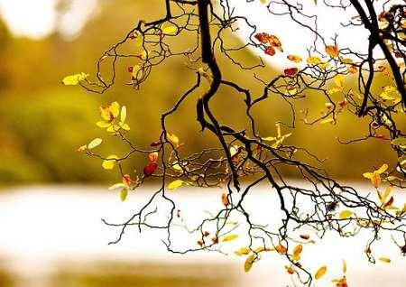 Cảm nhận về mùa thu hay nhất
