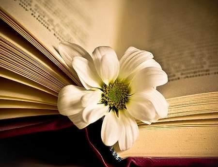 Bài viết số 7 lớp 8 đề 2: Văn học và tình thương