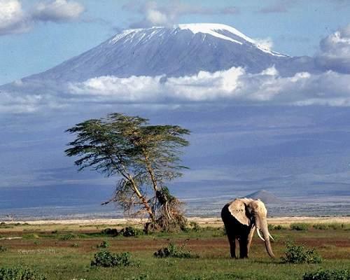 Đỉnh núi cao nhất châu Phi Kilimanjaro ở đâu? Cao bao nhiêu mét?