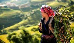 Mở bài Việt Bắc