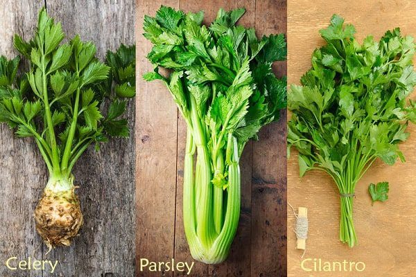 Parsley là gì? Công dụng bất ngờ của parsley bạn nên biết